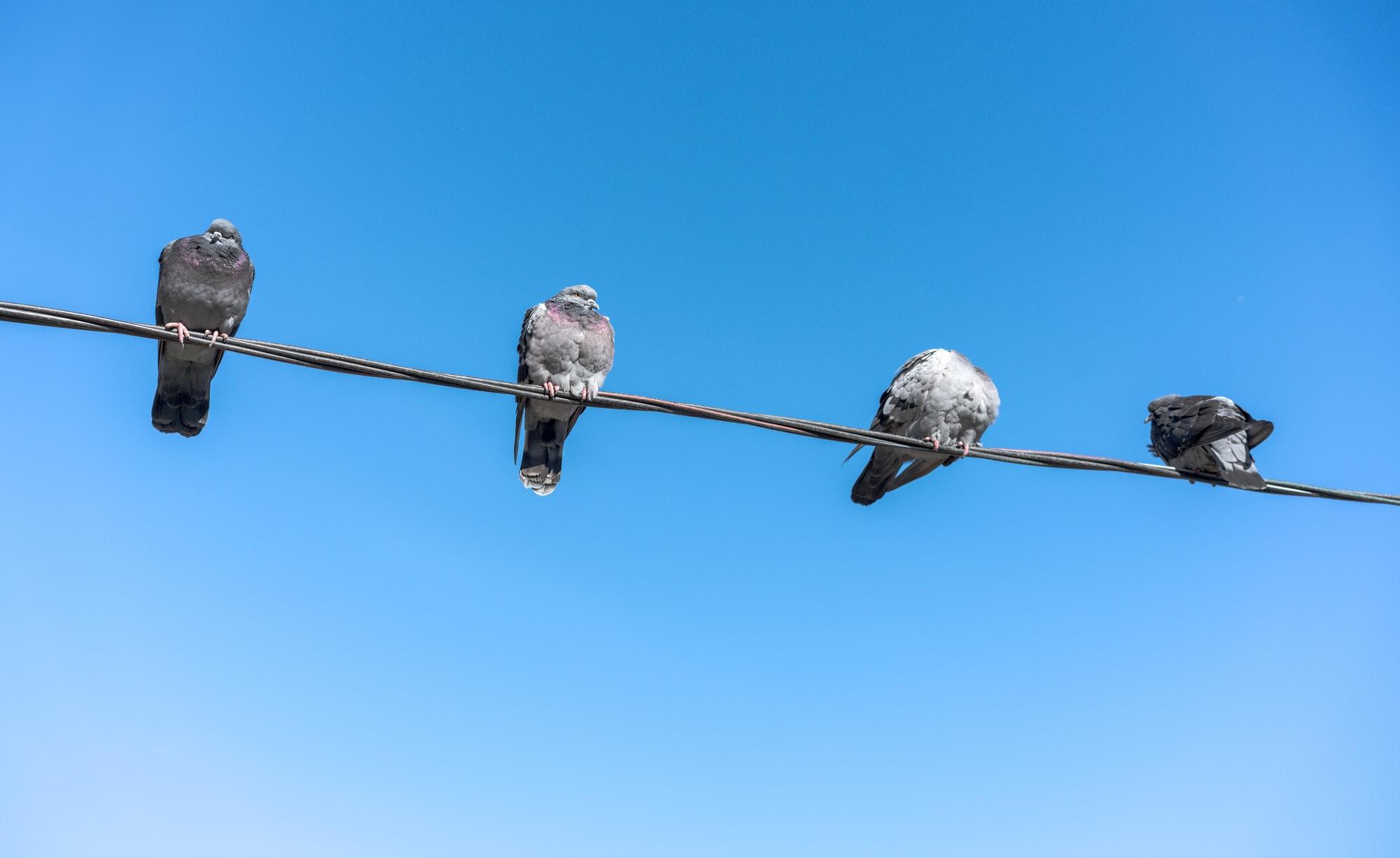 Din lokale elektriker Charlottenlund, udfører både el-renoveringer og fejlsøgning inkls. døgnservice. Tilbud gratis via mail og telefon. Se priser her.