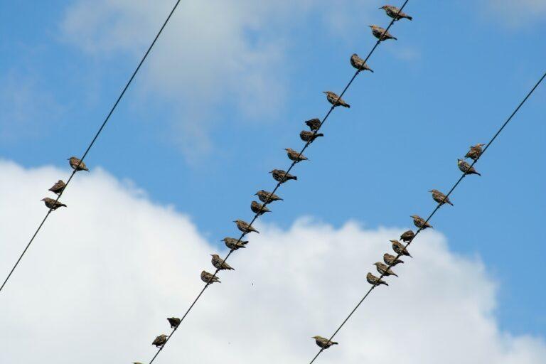 Hvordan kan fugle sidde på kraftledninger uden at få stød?