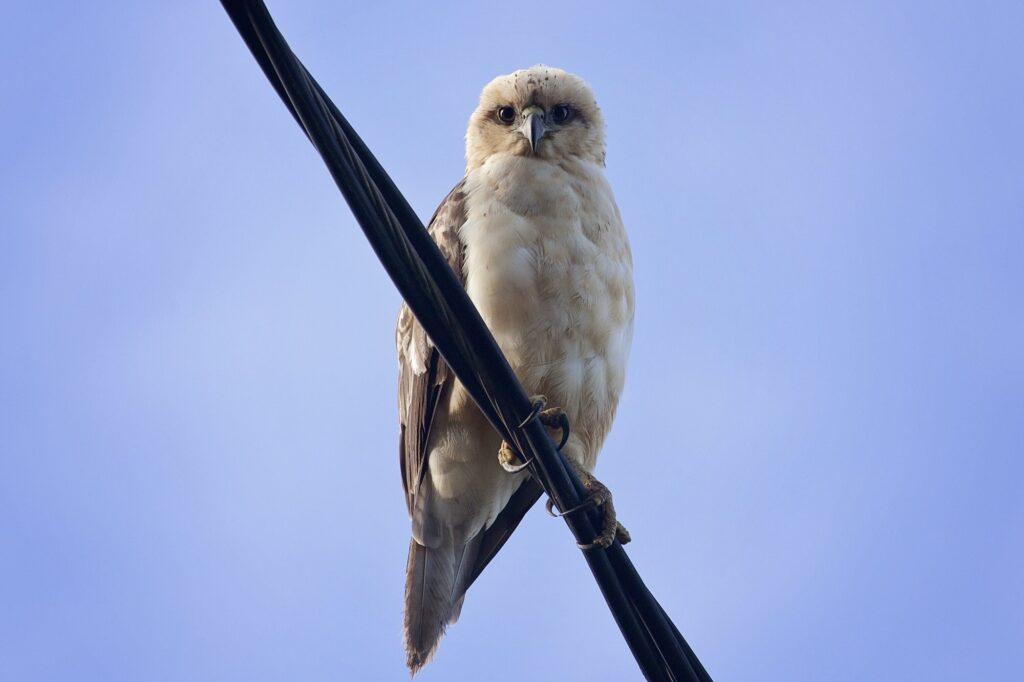 Hvordan kan fugle sidde på kraftledninger uden at få stød eller strøm? Her får du svaret og forklaringen hvorfor strøm er farligt og giver stød